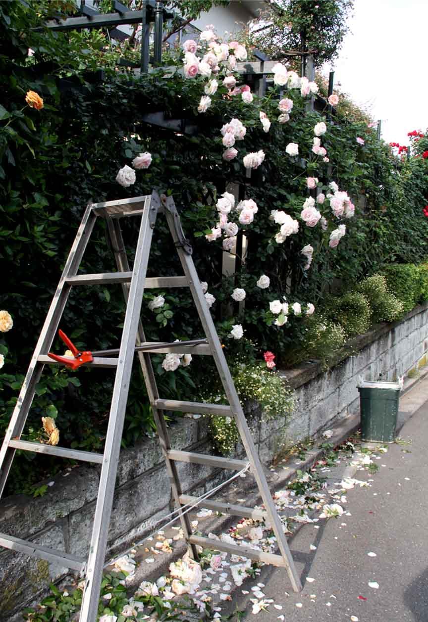 咲いた数だけある 咲きがら(3)