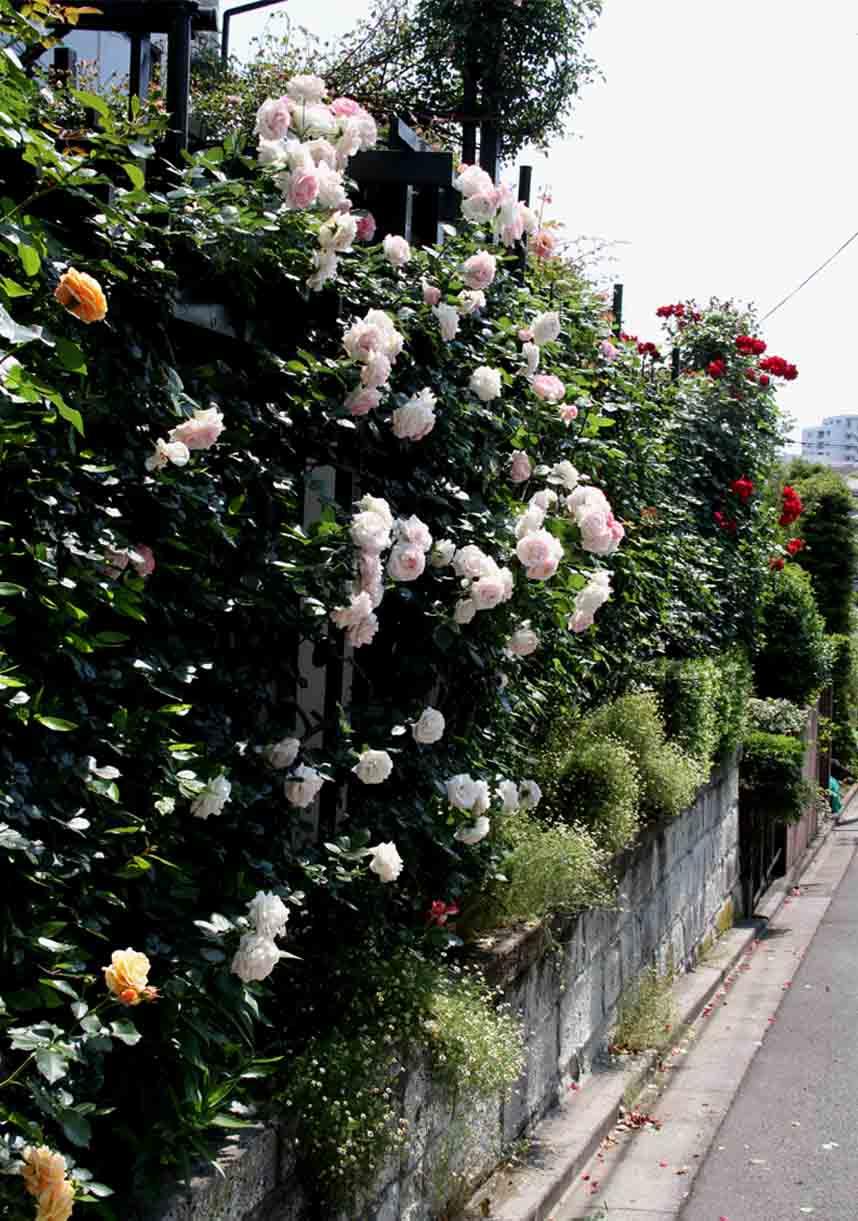 咲いた数だけある 咲きがら(4)