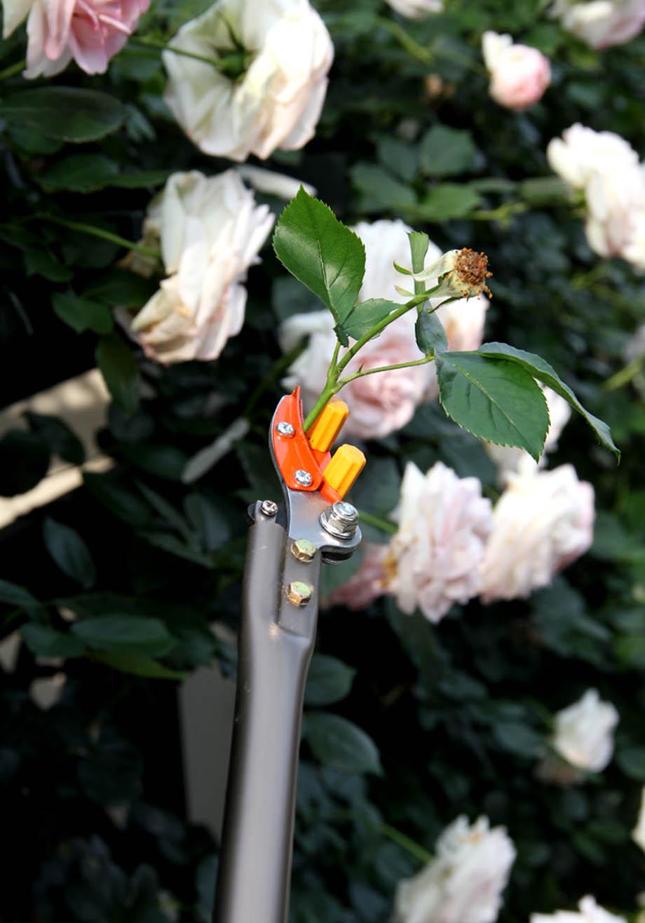 咲きがら取りグッズ(5)