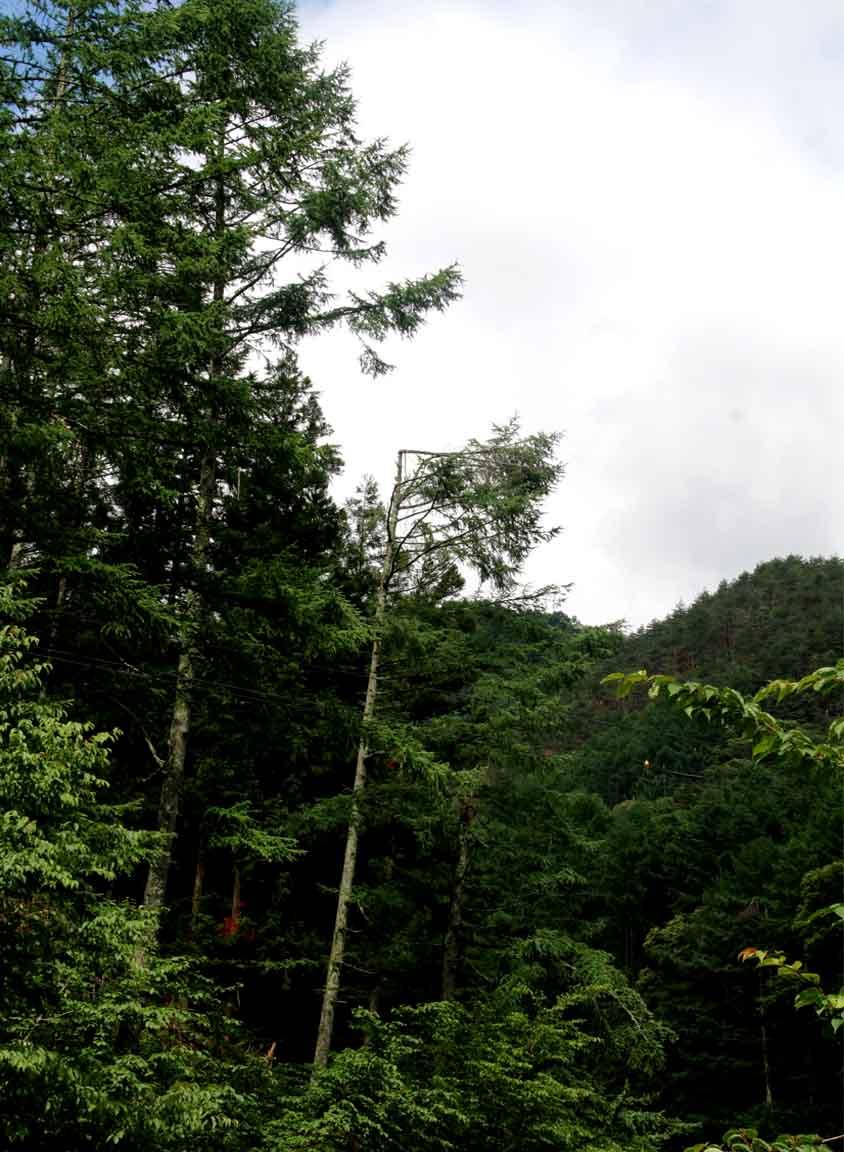 長野山岳講習会(3)
