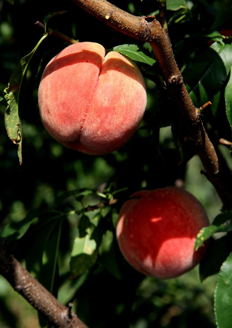 桃から桃ジャム(2)