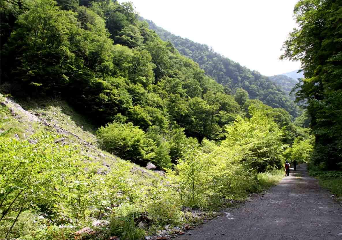 林道歩き(1)B