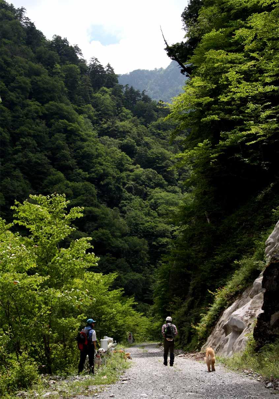 林道歩き(10)