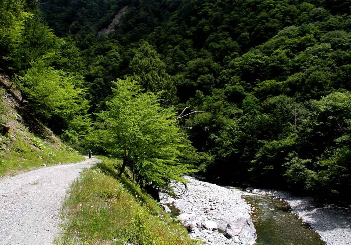 林道歩き(12)