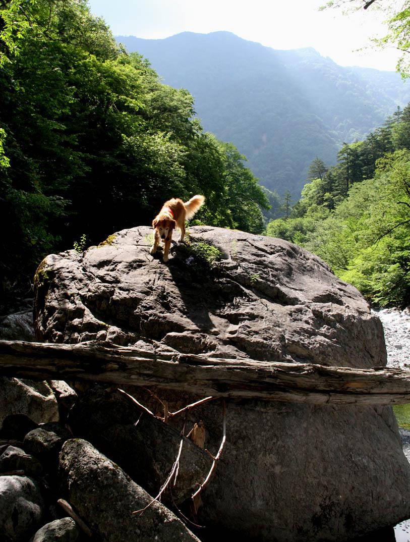 岩と樹の上で F(3)