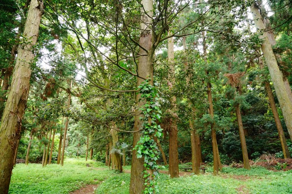 i飯島市民の森