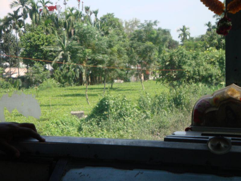 インド紅茶畑