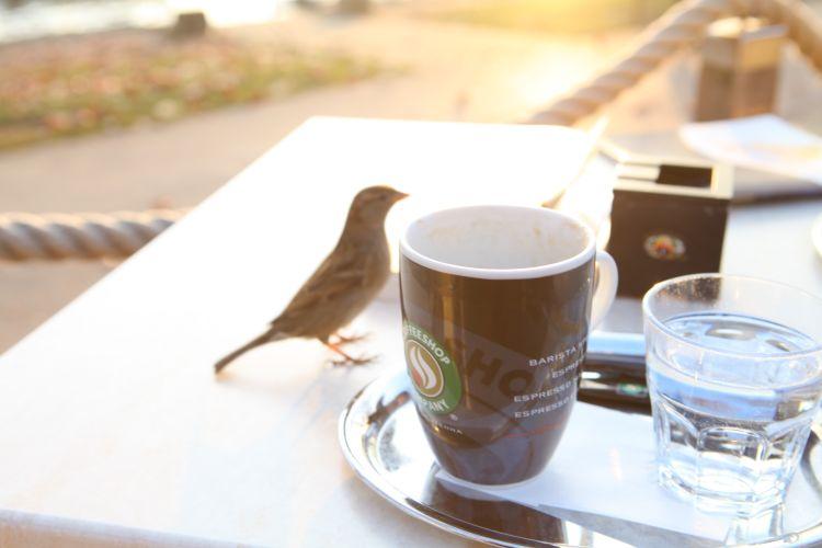 海外カフェ