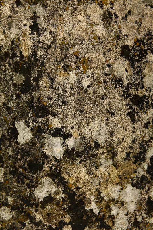 岩苔アート