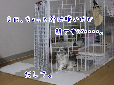 IMG_0095_20160503083740a83.jpg