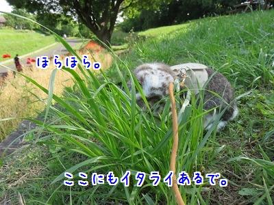 IMG_0803_20160515115934e2e.jpg
