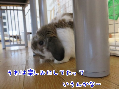 IMG_0921_20160820143642567.jpg