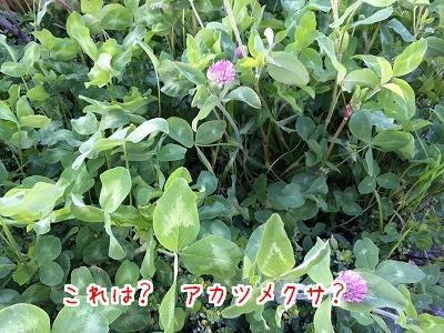 IMG_2282.jpg