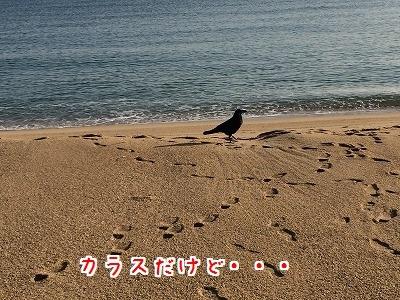 IMG_4266.jpg