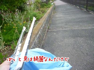 P1260111.jpg