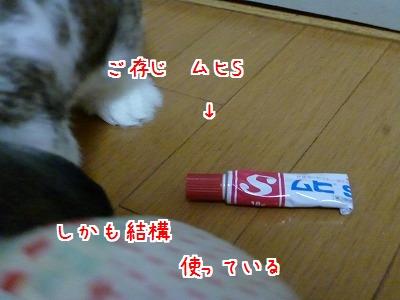 P1260373.jpg