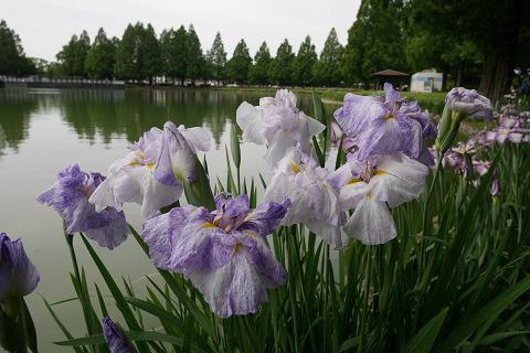 2016-06-01 川越水上公園 028