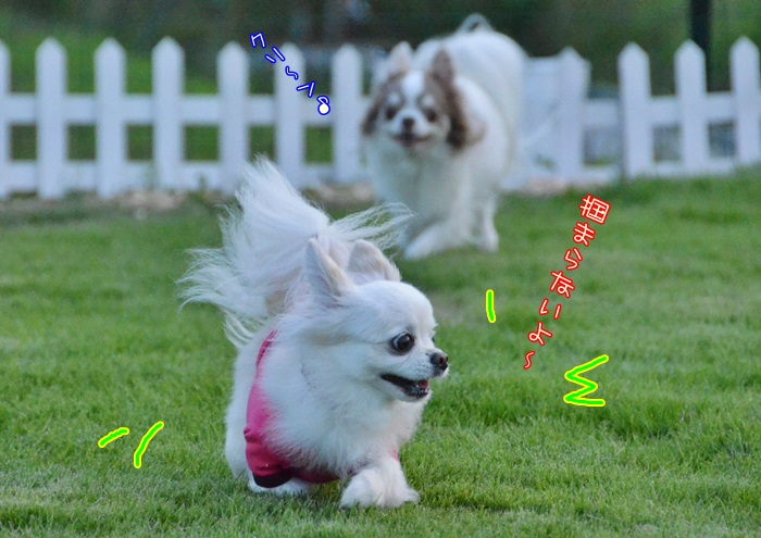 DSC_0199_20161004210924a0c.jpg