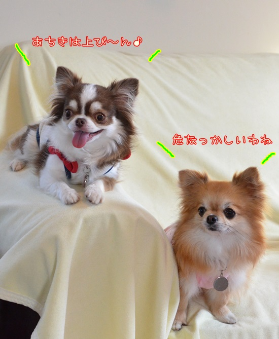 DSC_7150_2016051521393198e.jpg