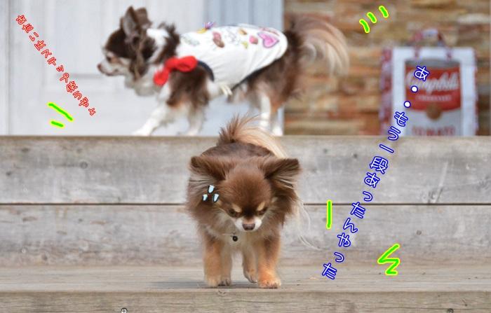 DSC_7233_20160516222637ed0.jpg