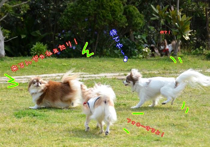 DSC_7240_20160518212808b14.jpg