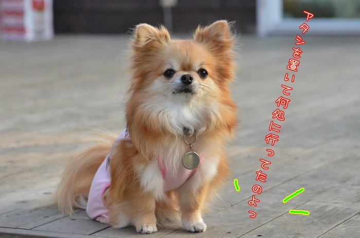 DSC_7665_2016053020213976b.jpg