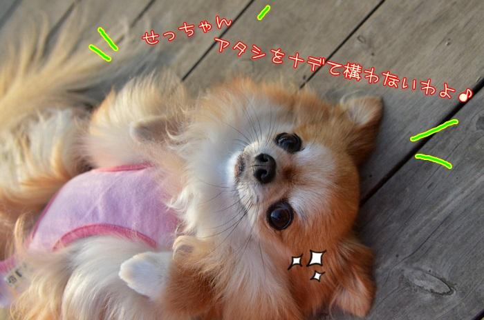 DSC_7671_20160530202144e6f.jpg