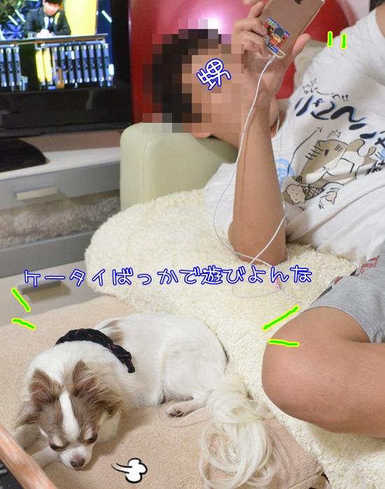 DSC_7893_201606112247091c3.jpg