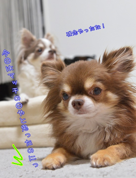 DSC_7902.jpg