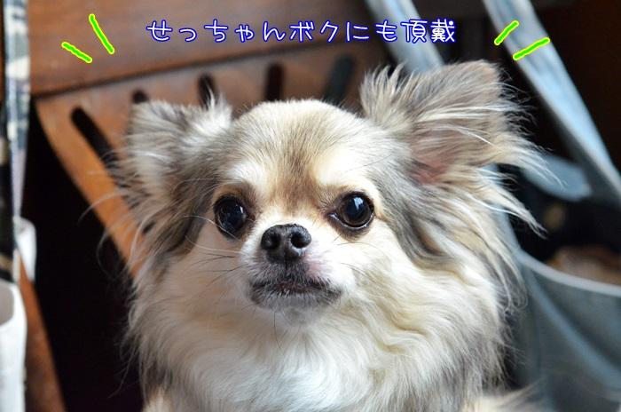 DSC_8059_20160626213108486.jpg