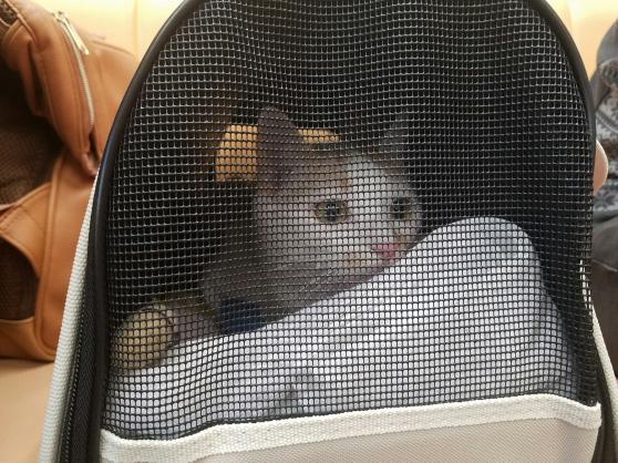 キティさん