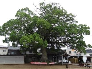 87長尾寺-大木26