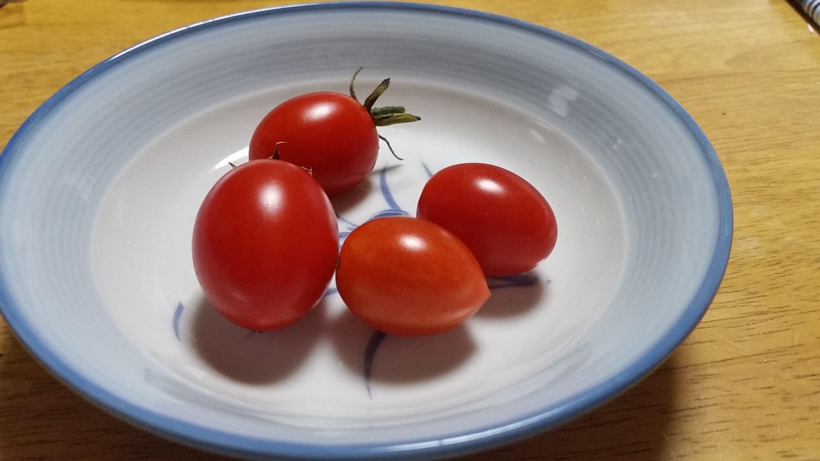 2016 初トマト