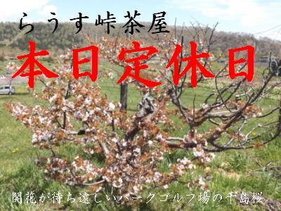 定休日 桜