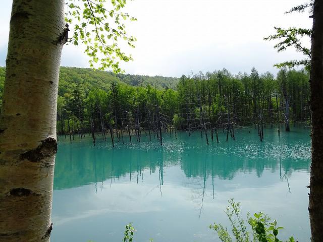 s-白樺と青い池