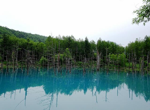 s-青い池曇りの日