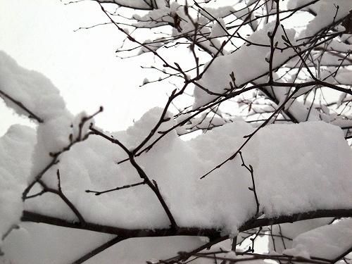 s-ドカ雪!