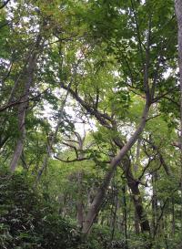 円山公園、森