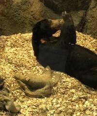 円山動物園のクマ