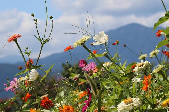 高原の花々