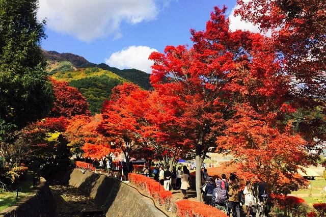 富士河口湖 もみじ回廊