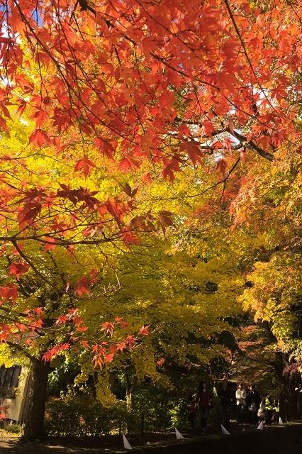 紅葉そして黄葉