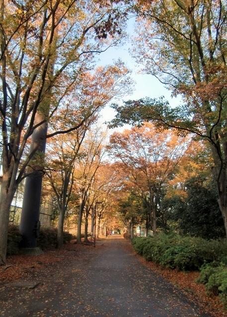 葉が落ちてすっかり寂しくなった樹々