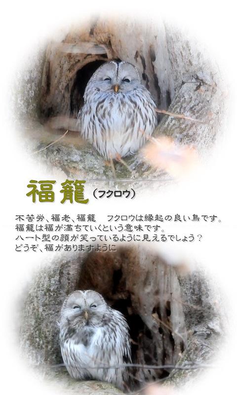 20161020fukurou.jpg