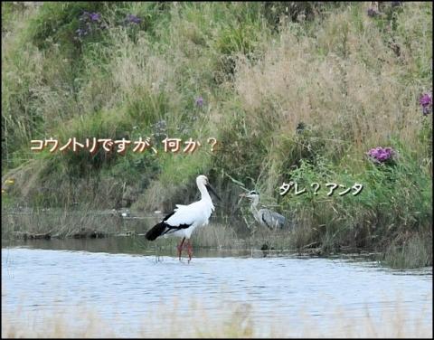 20161021kouno1.jpg