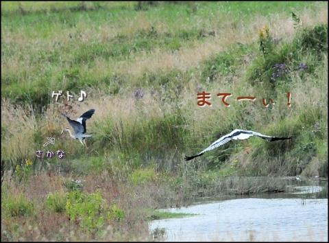 20161021kouno2.jpg