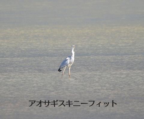 20161221aosagi.jpg