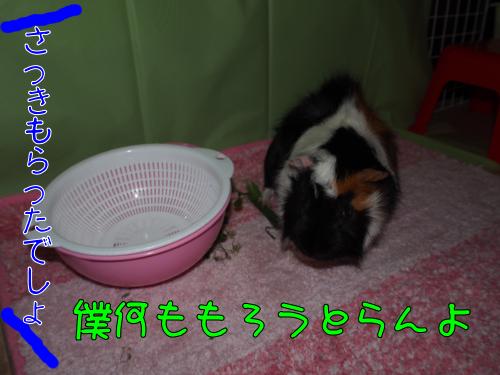 20140421oyatuha4.png