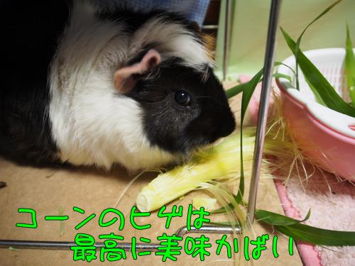 20140426coonnohige2.png