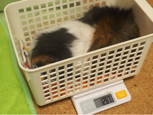 20160718weight.png